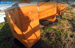 Продам пчелопакеты и семьи